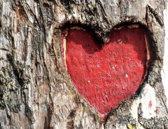 Mallkimi i Kupidit: A mund të vdesë njeriu nga zemër-thyerja?
