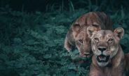 Pse dokumentarët mbi natyrën rrëfejnë gjysmë gënjeshtra