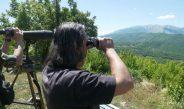 Në kufirin Shqipëri-Greqi lulëzon kontrabanda e kanabisit